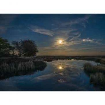 Moon in Bog Pool