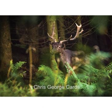 Shropshire Deer