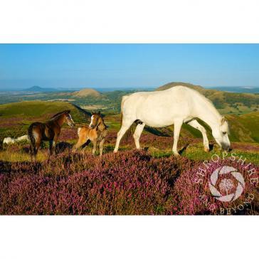 Horses in Shropshire