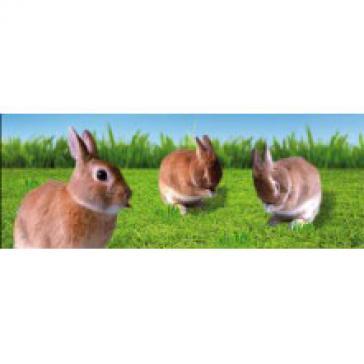Rabbits bookmark